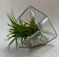 Air Plant Happy Homes - Sunday,  August 8, 2021